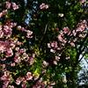 桜の花びらを追って視界を回せば