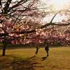 桜とジャンプと笑顔が咲く場所