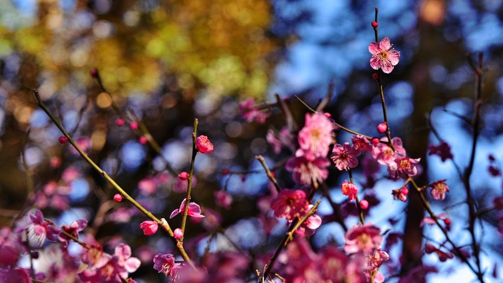 視界に広がる梅の味