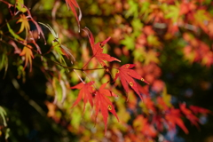 さまざまな紅葉