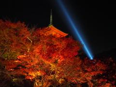 紅葉と慈悲の光