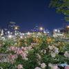 夜のバラ園