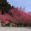 花桃の里3