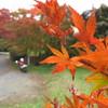 晩秋の紅葉と3