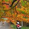 晩秋の紅葉と2