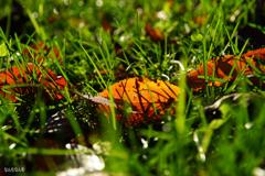 vividな秋