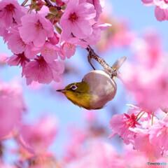 春爛漫〜\(^o^)/