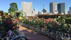東京のど真ん中で見つけた薔薇園