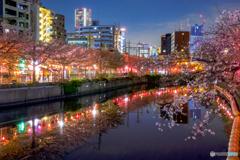 大岡川の桜15