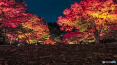 大田黒公園-紅葉ライトアップ2018⑨