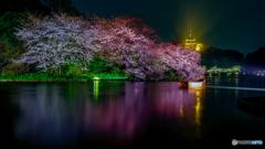 観桜の夕べ7