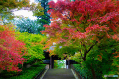 紅葉の円覚寺