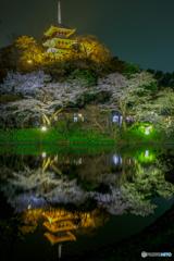 観桜の夕べ5