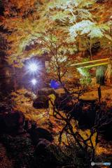 秋の夜間特別拝観2018⑥
