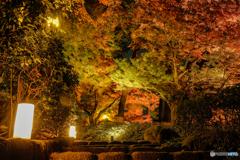 大田黒公園-紅葉ライトアップ2018⑦