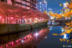 大岡川の桜13