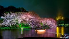 観桜の夕べ8