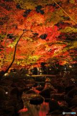 大田黒公園-紅葉ライトアップ2018⑤