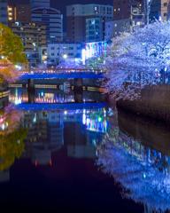大岡川の桜6