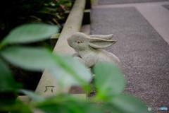 明月院Collection2017-茶々橋うさぎさん-