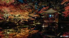 大田黒公園-紅葉ライトアップ2018⑥