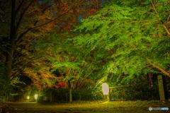 六義園-紅葉と大名庭園ライトアップ2018-6