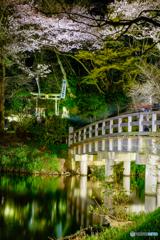 観桜の夕べ6