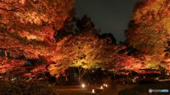 大田黒公園-紅葉ライトアップ2018⑧