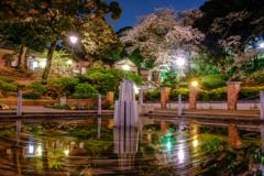 元町公園の桜2
