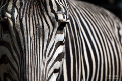 Stripe 3