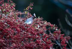 始めて撮れた 鳥
