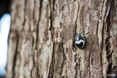 自転車を立てかけた木で見つけた虫