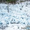 氷の造形美