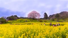 春を愛でる人々