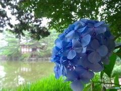 雨の石神井公園04