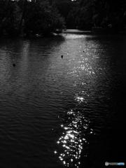 三宝寺池の燦めき