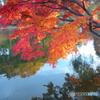 晩秋のの石神井公園4