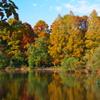 秋色に染まる三宝寺池
