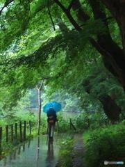 雨の石神井公園03