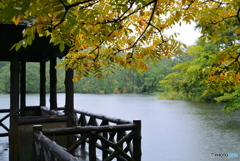雨の三宝寺池と東屋と紅葉