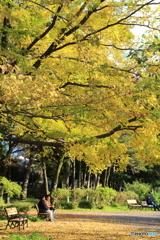 紅葉の石神井公園4