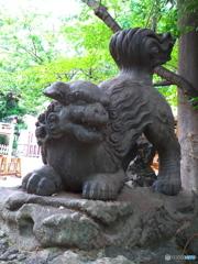 下落合氷川神社の狛犬2
