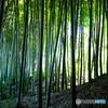 竹林公園2