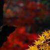 紅葉の石神井公園