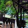 國領神社の千年の藤5