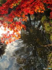 晩秋のの石神井公園6