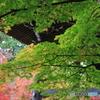 道場寺の紅葉3