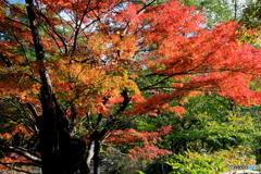 紅葉の石神井公園3