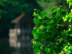 朝の石神井公園01