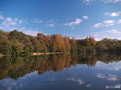 11月の石神井公園1